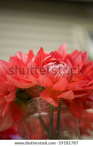 red flower flame petals