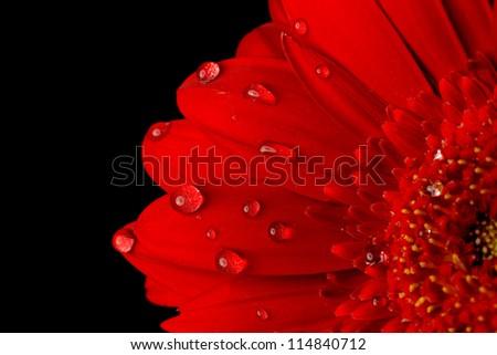 red flower flower close up  background