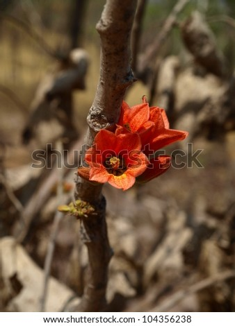 Red flower in a desolated forest after a bush fire