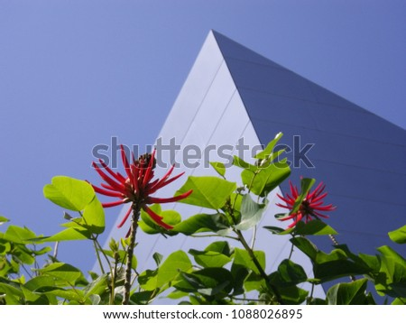 Red flower in front of Disney concert hall