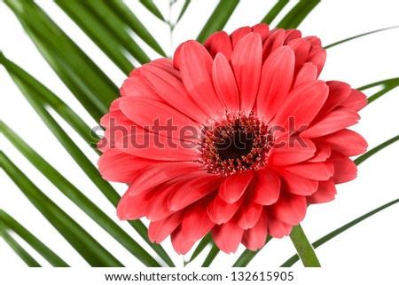 red flower on background of palm leaf