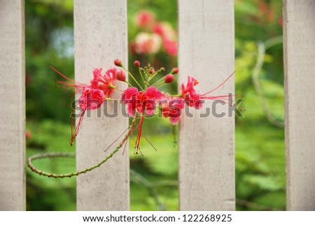 Red flower on the fence
