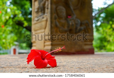 Red flower on the ground. Red flower falling. Red flower