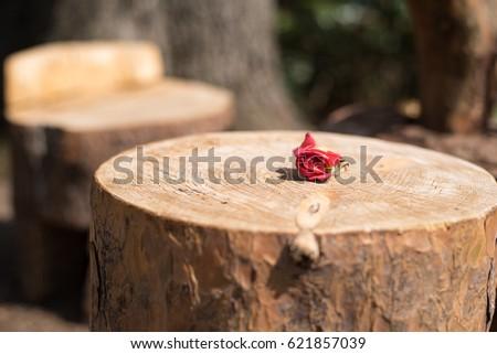 Red Flower on Tree Stomp