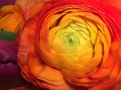 red flower,orange flower,yellow flower macro