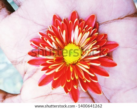 Red flower photography on hand red flower photography nature photography nature photography