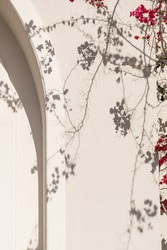 Red flower plant branches and sunlight shadow on neutral beige wall. Aesthetic floral shadow silhouette background