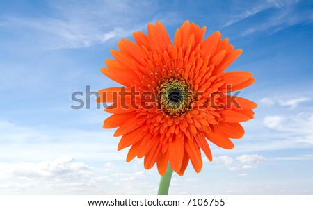 red flower with a blue sky as background