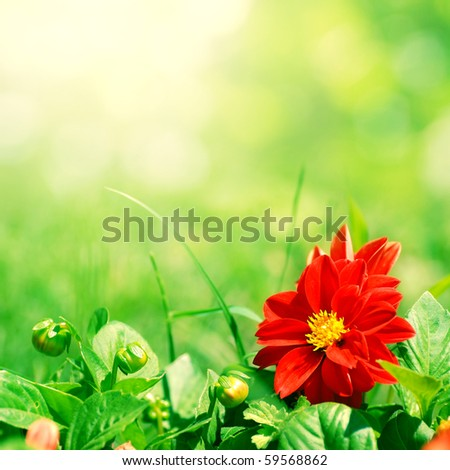 red flower with green buds on blurred background