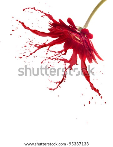 red flower with paint splash on white isolated background