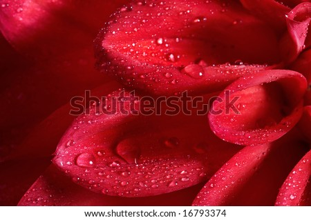 Red flower with water drops