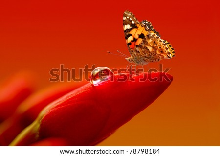 red flowers and butterfly