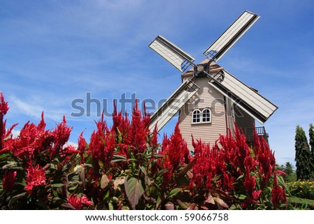 Red flowers & beautiful windmill