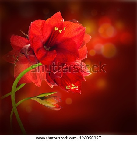 Red flowers, bouquet of gerber