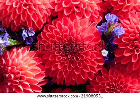 Red flowers close up