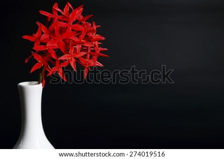 Red flowers in white vase.