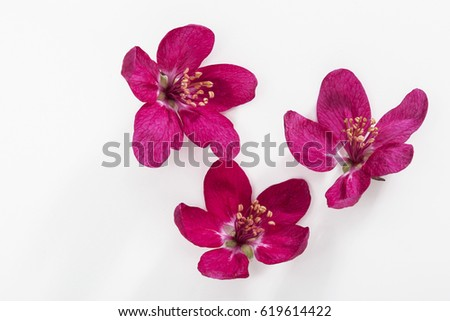 Red flowers isolated on white background, design elements for layout design