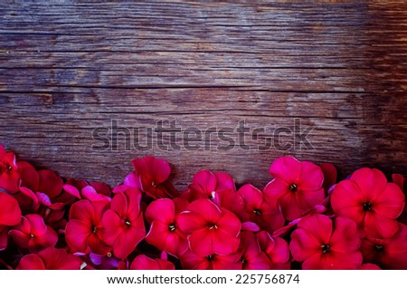 red flowers on a dark woody background. tinting. selective focus