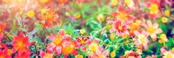 Red flowers on soft pastel color in blur style. Natural defocused panoramic background.