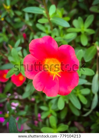 Red flowers with yellow stamens are asian flowers ez canvas red flowers with yellow stamens are asian flowers mightylinksfo