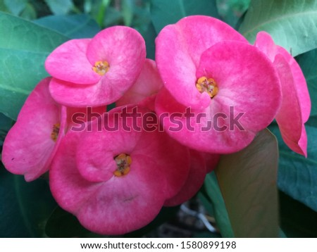 Red flowers without pollen, odorless, thorny stems Beautiful flowers at the end of the stem. #1580899198