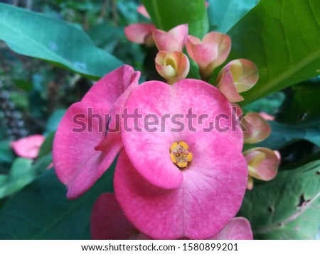Red flowers without pollen, odorless, thorny stems Beautiful flowers at the end of the stem. #1580899201