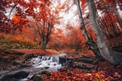 Red Foggy Thicket. Scenic Misty Forest Autumn Landscape. Beautiful Stream In The Forest With Red Foliage.Trees With Red Leaves.Stones With Moss In The Blurred  Water.  Creek And Wood Bridge