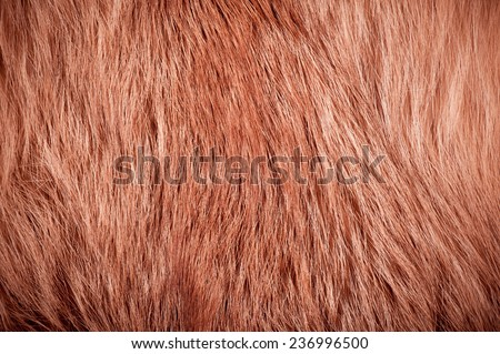 Red fox fur hair texture cloth abstract, furry rusty texture plain surface, rough pelt background in horizontal orientation, nobody.