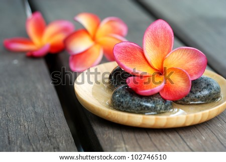 Red frangipani flower with stones. Spa & aromatherapy concept