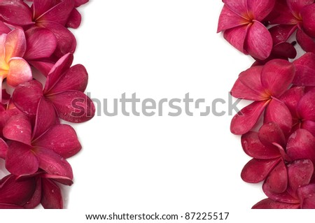 Red frangipani flowers left and right frame isolated white background