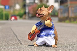 Red French Bulldog dog dressed up with street performer musician costume wearing striped shirt and fake arms holding a toy guitar standing in city street on sunny day
