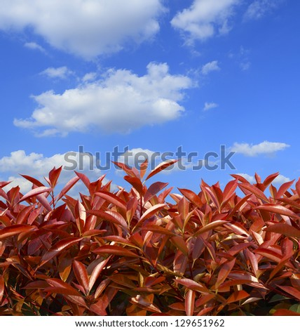 Red fresh leaves background spring growth in cloud skyline
