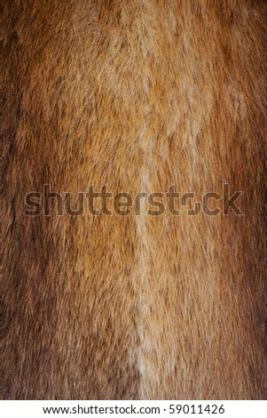 Red fur texture. Background