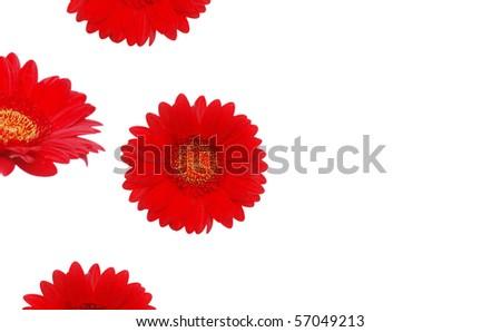 Red gerbera bloom frame