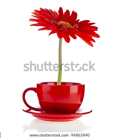 red gerbera flowers  in a cup with copyspace on white background