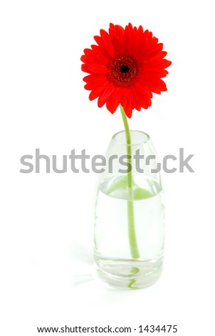 Red gerbera in a glass vase on white background #1434475