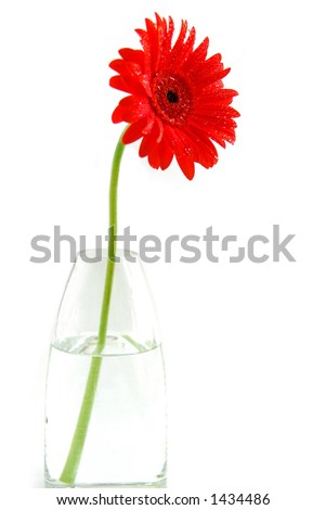Red gerbera in a vase on white background #1434486