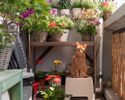 Red / ginger cat sits on a small stool on the balcony in front of a plant pot table with various outdoor plants and flowers