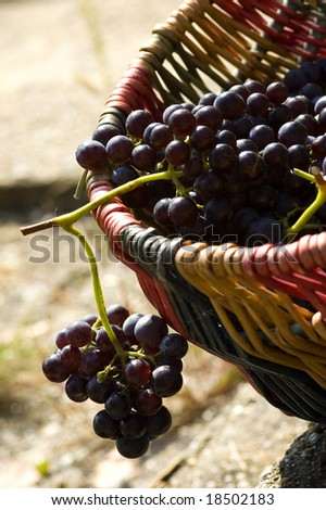red grapes in a color basket
