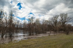 Red grass and flooded bare trees on the shore of a spring lake. Spillage of water. High water. Spring evening landscape.