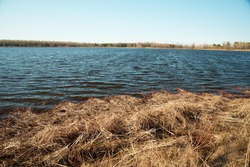 Red grass on the shore of a spring lake. Spillage of water. High water. Blue sky. Spring evening landscape.