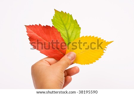 Red, green, yellow leaves in woman hand