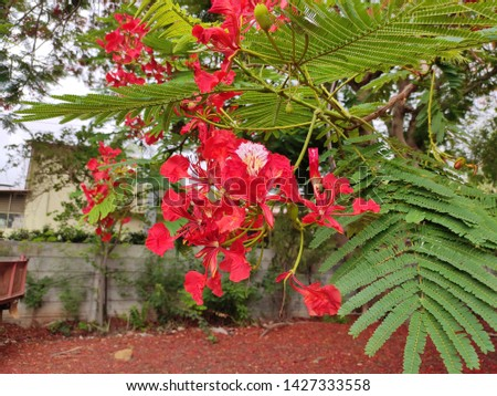 Red Gul mohair plant with green leaves