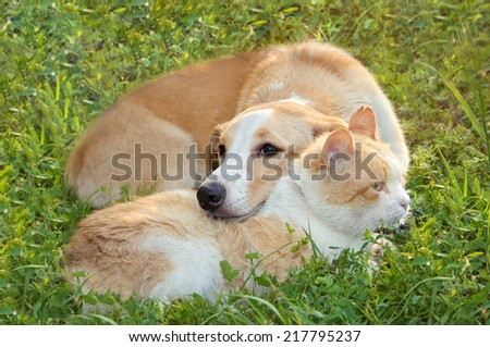 red-haired cat sleeps with a red-haired dog on a green lawn