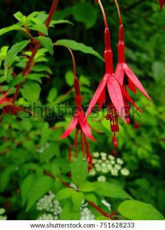 red hanging flower #751628233