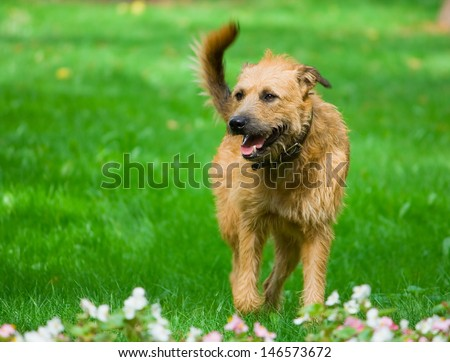 red happy dog running in the park #146573672