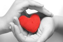 Red heart in gentle hands.