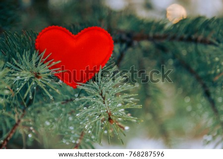 red heart in spruce branches. Fir branches. A background of spruce. Background with bright spruce branches. Spruce branches in the drops of rain #768287596
