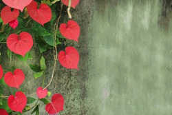 Red heart leaves and lime walls leave empty space.