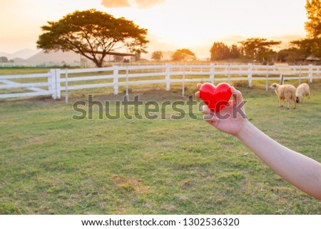 red heart on hand with sheep farm background